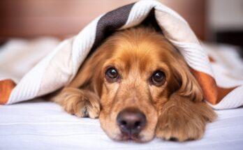 alimentation idéale pour les chiens