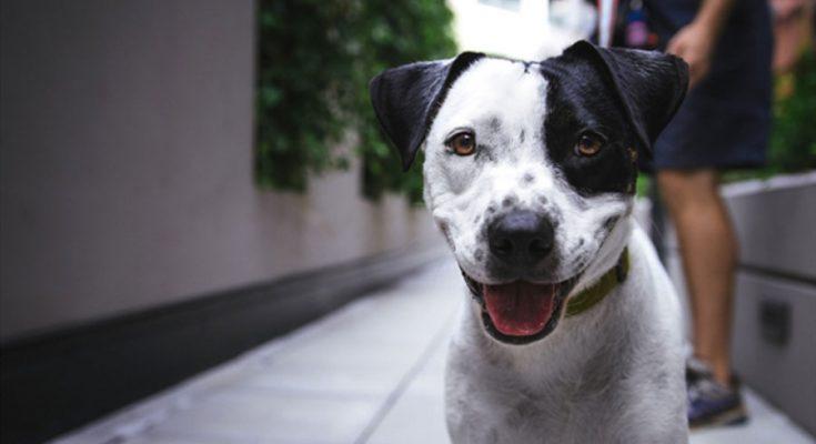 besoins fondamentaux chien