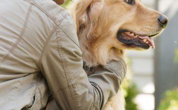 prendre soin de son chien... même quand il aboie !
